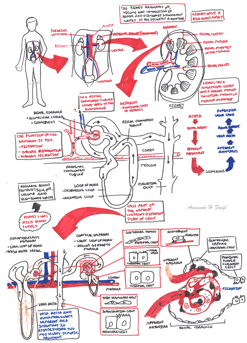 Nephrology - Overview